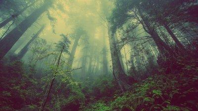O caminho através da floresta, de Rudyard Kipling